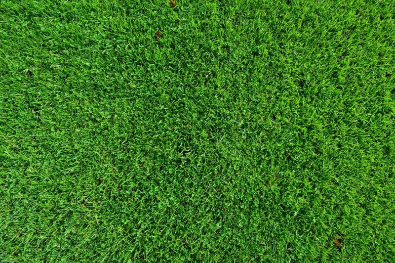 Gras in vele soorten en ook kunstgrassenGras in vele soorten en ook kunstgrassen